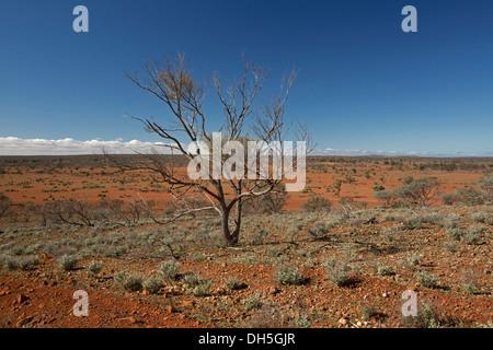 Australischen outback-Landschaft mit einsamen Baum auf weite karge rote Ebenen ausdehnen, blauer Himmel und Horizont - Stockfoto