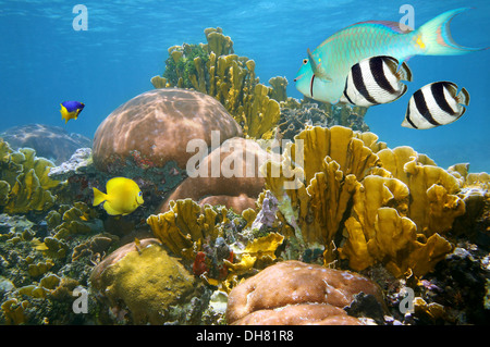 Unterwasser-Szene mit gesunden Korallenriffe und bunte tropische Fische, Karibik - Stockfoto