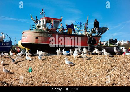 Fischer bereiten ihr Boot umgeben von Möwen am Strand von Hastings - Stockfoto
