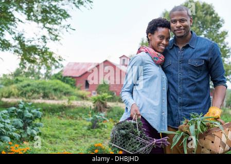 Ein Bio-Gemüsegarten auf einem Bauernhof. Ein paar tragen Körbe mit frisch geernteten Mais Maiskolben und grünes - Stockfoto
