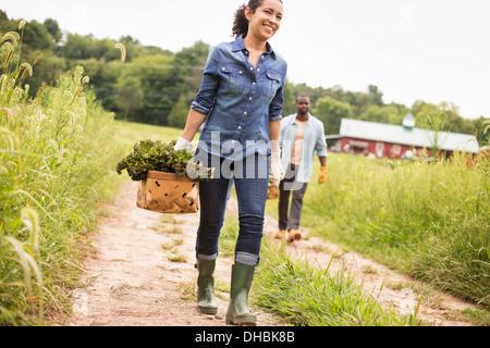 Zwei Personen auf einem Bio-Bauernhof arbeiten. Körbe mit frisch gepflückten Gemüse tragen. - Stockfoto
