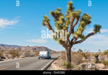 Kalifornien, Joshua Tree Nationalpark, Joshua Tree, Yucca brevifolia - Stockfoto