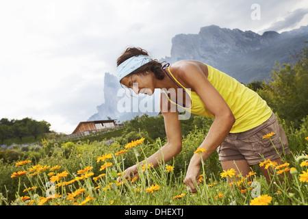 Frau Blumen pflücken - Stockfoto