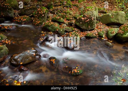 Ilse River im Ilsetal Valley im Herbst, Harz, Nationalpark Hochharz, Sachsen-Anhalt, Deutschland, Europa - Stockfoto