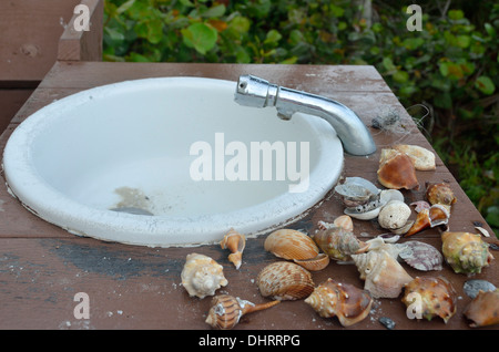 Seashell Waschplatz im Hilton Resort auf Marco Island, Florida - Stockfoto