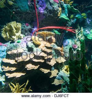 Verschiedene Bilder oder Fotos von der Unterwasser oder Unterwasser Naturparadies - Stockfoto