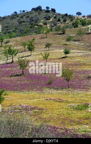 Feld mit Flieder Frühling Blumen und Bäumen, in der Nähe von Ardales, Provinz Malaga, Andalusien, Spanien.