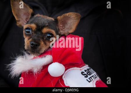 Tiere in der Kleidung in; Hunde in Weihnachten Kostüme in Nelson, Lancashire, UK. 30. November, 2013. Chalkie Welpe, - Stockfoto