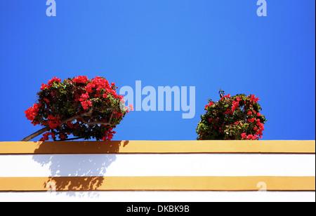 Blumen auf dem Dach, Puerto de Mogán, Gran Canaria, Kanarische Inseln, Spanien - Stockfoto