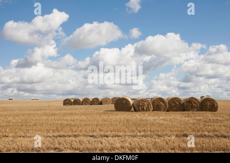 Strohballen auf abgeernteten Feld, Dolgen, Feldberger Seenlandschaft, Landkreis Mecklenburgische Seenplatte, - Stockfoto
