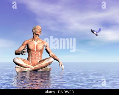 Männliche Muskulatur im Lotussitz auf dem Wasser beim Betrachten eines schönen Vöglein fliegen. - Stockfoto