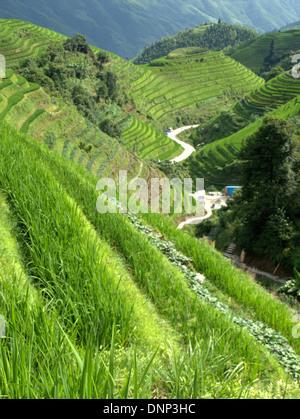 Die Reisterrassen von Longsheng (Lóngshèng Tītián) oder des Drachen Rückgrat Reisterrassen, gelegen in Longsheng - Stockfoto