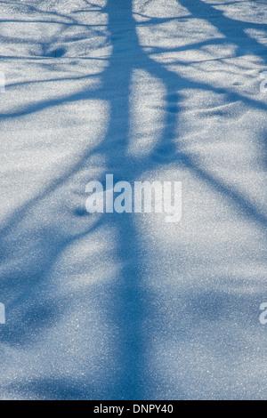 Schatten auf dem Schnee - Stockfoto