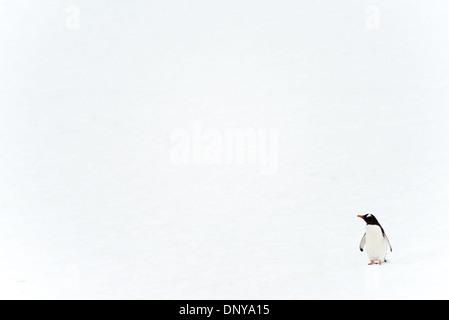 Antarktis - ein einsamer Gentoo Pinguin Spaziergänge unbeholfen auf dem Schnee an Petermann Island in der Antarktis. - Stockfoto