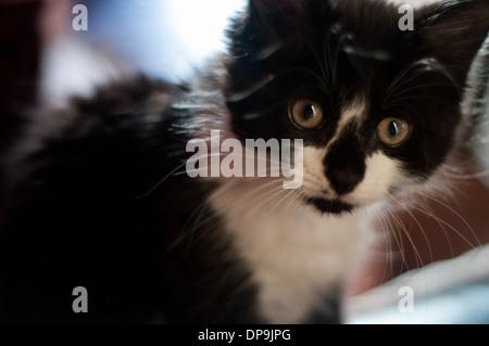Eine schwarze und weiße Katze mit grünen Augen - Stockfoto