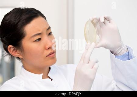 Wissenschaftlerin untersucht bakterielle Wachstum/Plaketten in Petrischale - Stockfoto