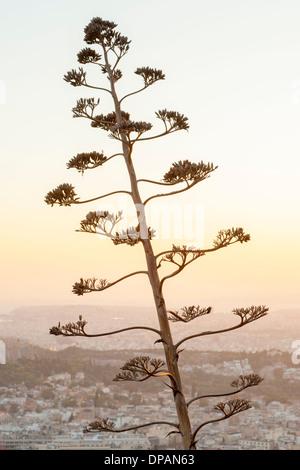 Ast vor der Stadt von Athen, die Hauptstadt von Griechenland zu sehen. - Stockfoto