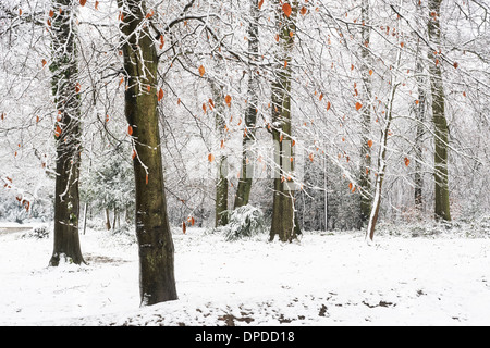 Schneebedeckte Bäume am oberen Rand der Box Hill, Surrey - Stockfoto
