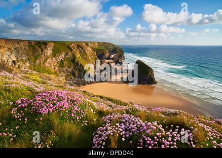 Die Deckung der Sparsamkeit wächst auf der Klippe am Bedruthan Steps, North Cornwall - Stockfoto