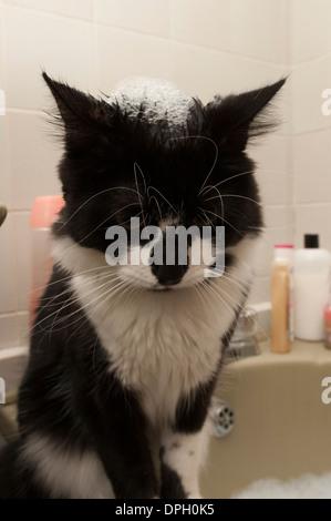 Eine schwarze und weiße Kätzchen mit grünen Augen mit Schaumbad Schaum auf Kopf. - Stockfoto