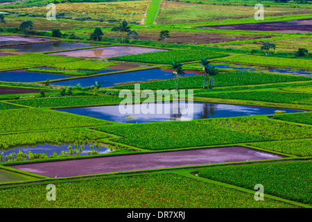 Taro-Felder in Hanalei Valley, Kauai, Hawaii, USA - Stockfoto