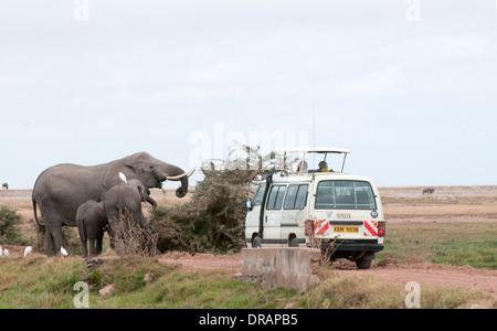 Somak weißen Kleinbus in der Nähe von Elefantenfamilie Surfen auf Büsche im Amboseli Nationalpark Kenia in Ostafrika - Stockfoto