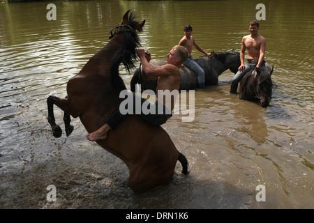 Pferd, Baden in einem Teich in der Nähe von Mozhaysk, Russland. - Stockfoto