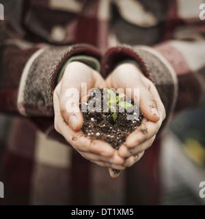 Eine Person in einem kommerziellen Gewächshaus einen kleine Pflanze Setzling im Boden in ihrer hohlen Hand halten - Stockfoto