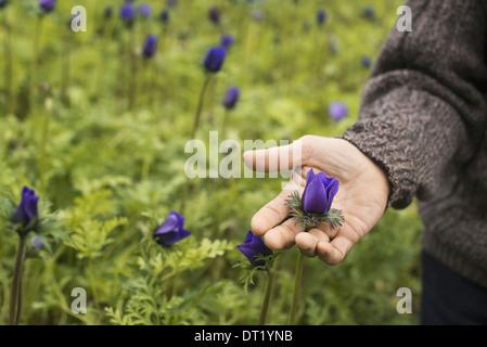 Ein Mann arbeitet in einer organischen Stoffen pflanzlichen Gärtnerei Gewächshaus im Frühjahr - Stockfoto