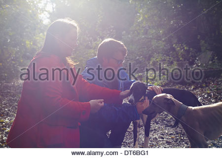 Junges Paar und ihre zwei Whippets in Wäldern - Stockfoto