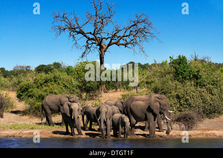 Von Victoria Falls ist möglich, die nahe gelegenen Botswana zu besuchen. Speziell im Chobe-Nationalpark. Chobe  - Stockfoto