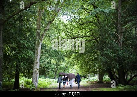 Ein Familienfest wieder anzeigen zu Fuß durch Wald im Regen mit Sonnenschirmen - Stockfoto
