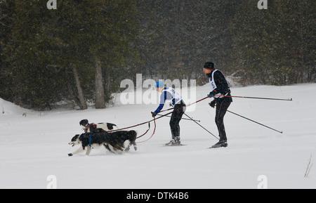 Ein skijöring Racer anderen vorbei auf dem Weg in eine Zwei hund Veranstaltung in Marmora Ontario snofest - Stockfoto