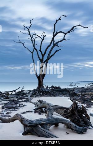 Treibholz und abgestorbene Bäume auf Blackrock Beach, Big Talbot Island, Florida - Stockfoto