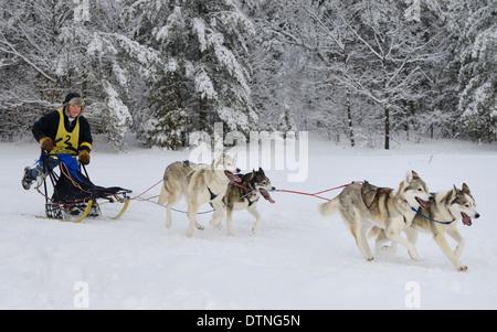 Männliche Musher auf vier Hundeschlitten-Rennen in Marmora Snofest Ontario Kanada mit schneebedeckten Bäumen abstoßen - Stockfoto