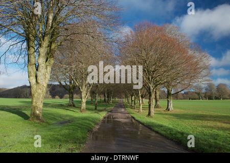 Schöne englische Landschaft an einem sonnigen Winternachmittag. Einer von Bäumen gesäumten Allee führt zu den winzigen - Stockfoto