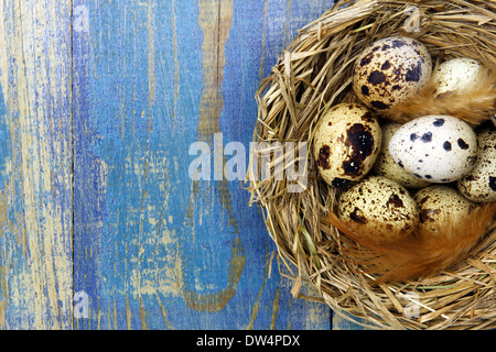 Wachteleier in einem Nest auf blauen hölzernen Hintergrund und Kopie Raum - Stockfoto