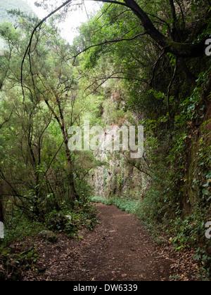 """Der Wanderweg zum Aussichtspunkt """"Mirador del Espigon Atravesado"""" in der Laurel Wald Los Tiles / Los Tilos, La Palma - Stockfoto"""