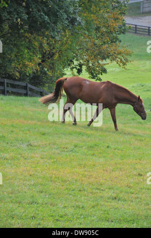 Pferde im Herbst - Stockfoto