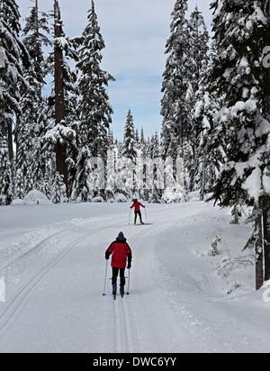 WASHINGTON - Skifahrer auf die Langlauf-Loipen in der Nähe von Windy Pass in Snoqualmie Pass Nordic Ski Area. - Stockfoto