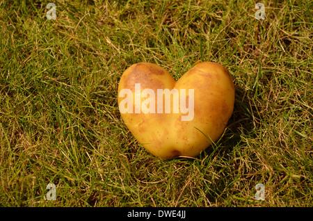 Kartoffel, die wie ein Herz geformt - Stockfoto