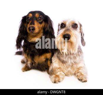 Braun und Grau Tier langhaarige Fell Textur Hintergrund. Waschbär ...