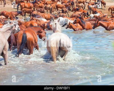 Tränke der arabischen Herde. sonnigen Tag - Stockfoto