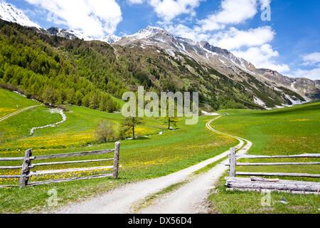 Schliniger Alm, Alm, im Valle di Slingia, Alta Val Venosta, Mt Muntpitschen und Mt Fernerkopf auf der Rückseite - Stockfoto