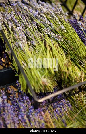 Getrockneten Lavendel in Kisten, erhöhte Ansicht, Nahaufnahme - Stockfoto
