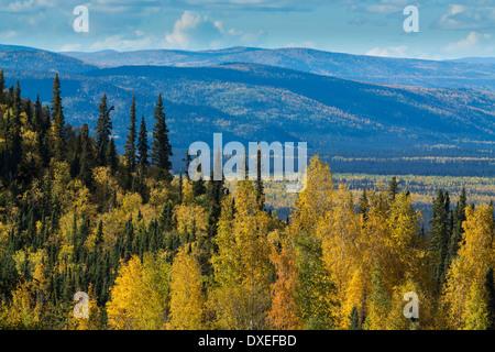 Herbstfärbung nr Pelly Crossing, Yukon Territorien, Kanada - Stockfoto