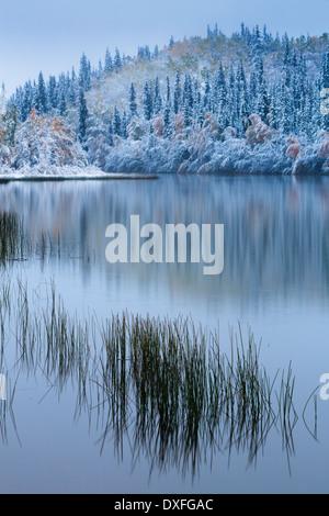 Herbstfärbung und der erste Schneefall an fünf Meile See. Silver Trail, Yukon Territorien, Kanada - Stockfoto