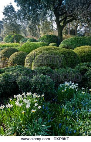 Buchsbaum formschnitt immergr ne str ucher gemischt grenzt - Buchsbaum formschnitt ...