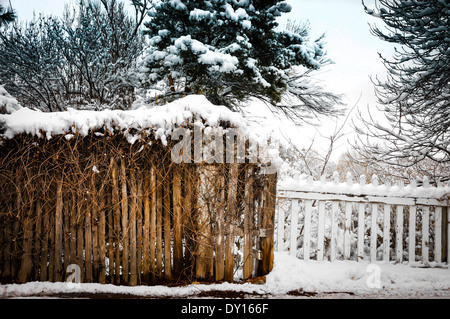 Winter-Szene von Schnee bedeckt Reben auf Coyote Zaun vor weißen Lattenzaun und Schnee bedeckt Tress überwuchert. - Stockfoto