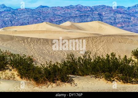 Death Valley Nationalpark Kalifornien Vereinigte Staaten von Amerika. Flache Mesquite Sand dunes - Stockfoto